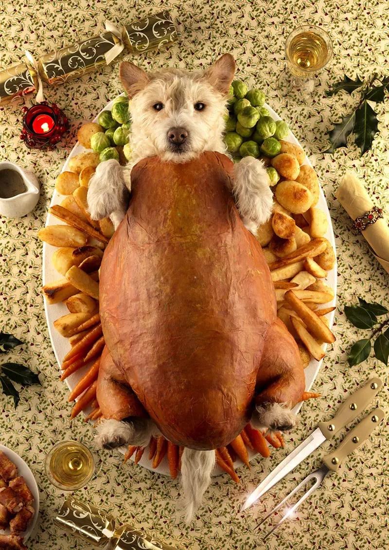 dog as roasted turkey