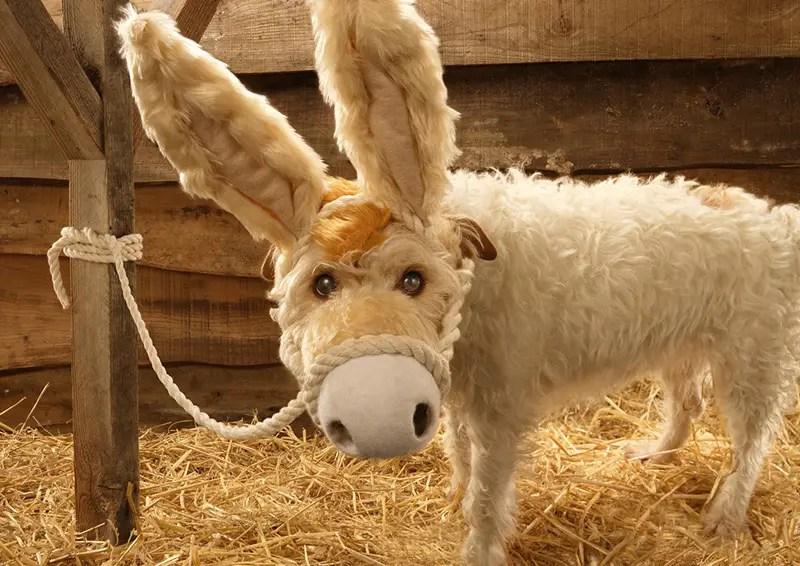 dog dressed as donkey