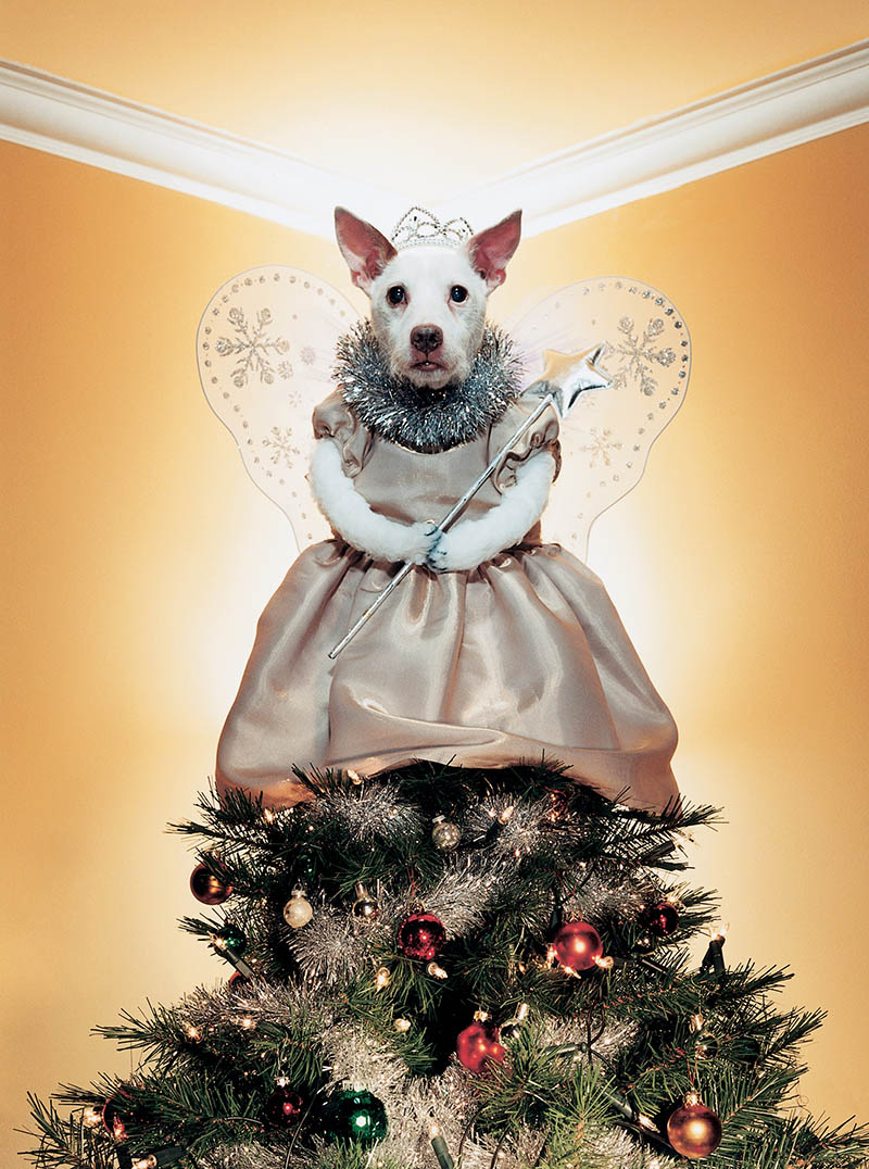 dog as treetopper