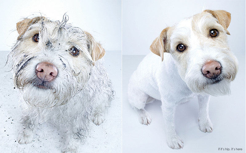 dirty dog and clean dog