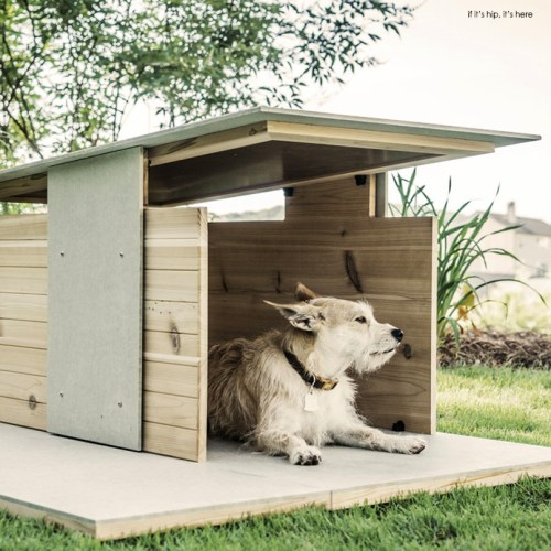 Read more about the article Dog Digs to Love: The Puphaus by Pyramd Design Co
