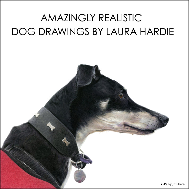 dog drawings by laura hardie
