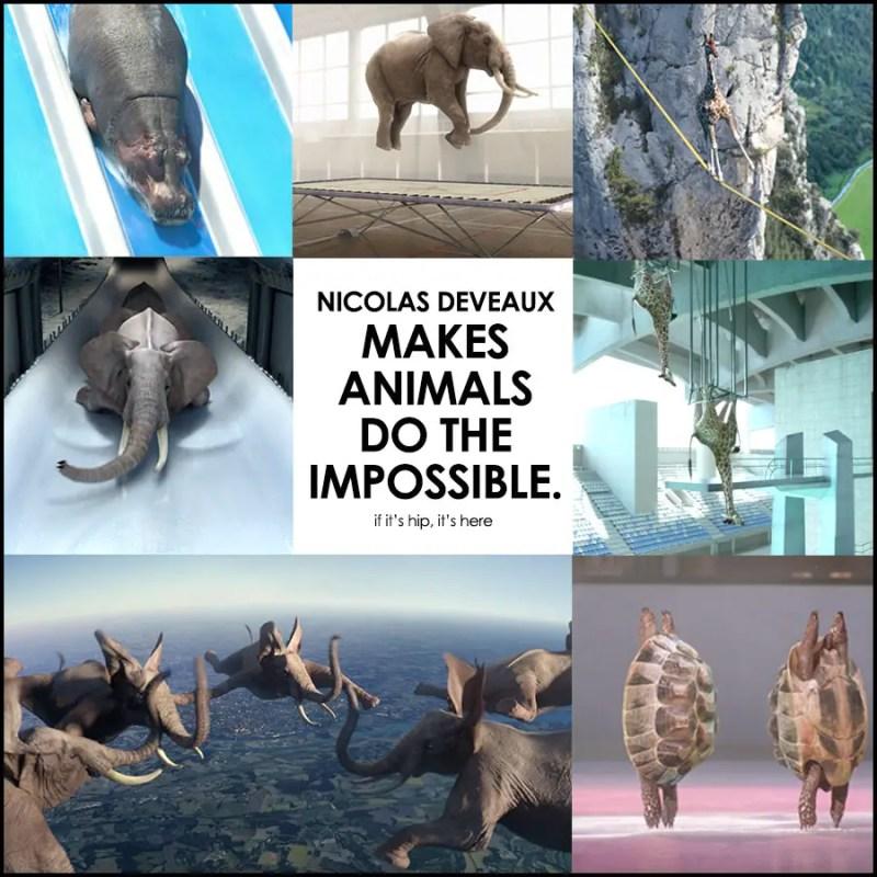 Nicolas Deveaux Animal videos