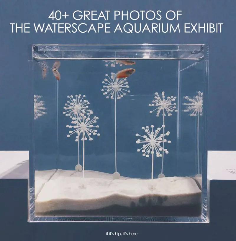 Waterscapes aquarium exhibit
