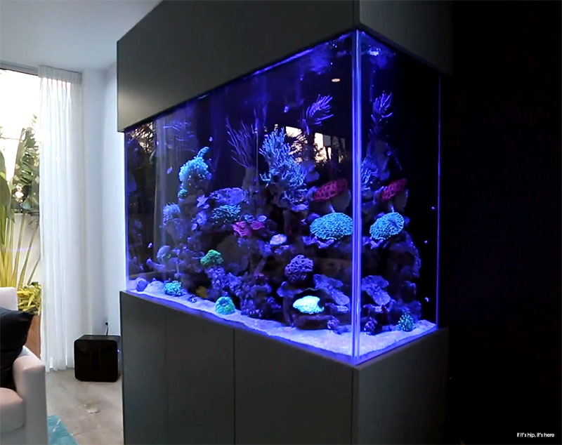Delightful The Family Room Has An LED Illuminated Living Reef Aquarium Wall.