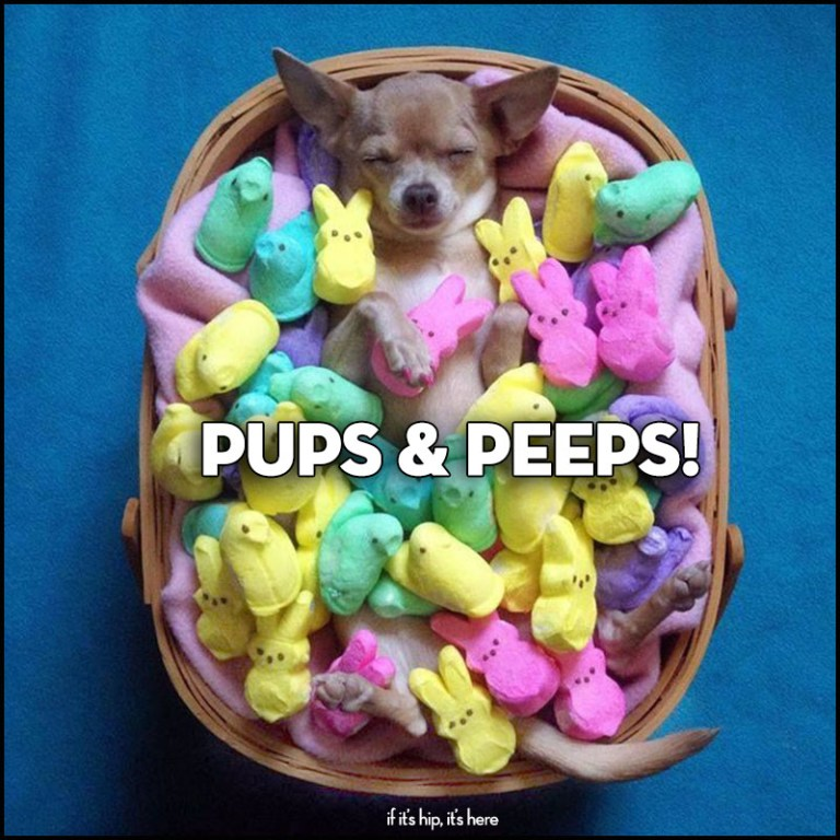 easter Treats: Pups and Peeps