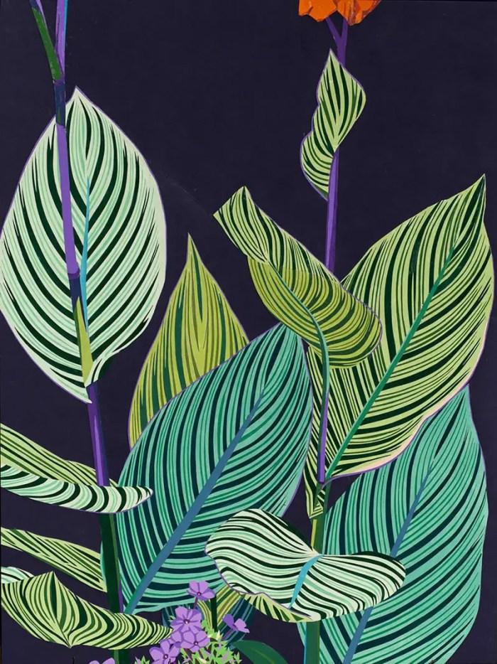 Canna 'Pretoria' Lily