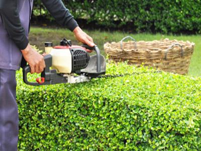 blythewood shrub trimming