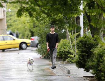 ifmat - Iran regime bans dog walking in public spaces in Tehran
