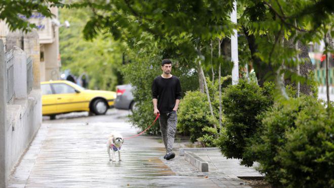 ifmat - Iran regime bans dog walking in public spaces in Tehran