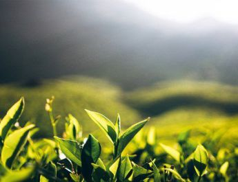 ifmat - Sri Lanka and Iran negotiate tea trade despite trade sanctions imposed on dollar transactions with Iran
