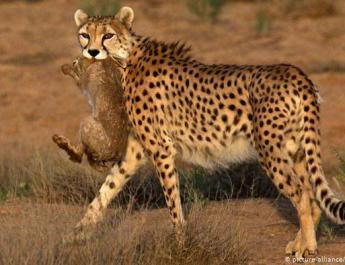 ifmat - Iranian cheetah researchers sentenced for spying