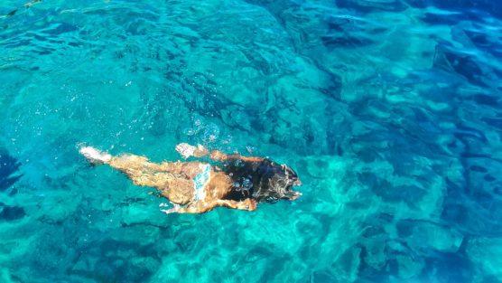 Nuotare al Giglio