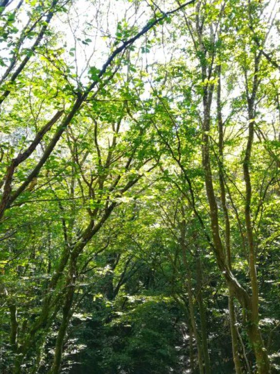 verde nei boschi mentre fare escursionismo