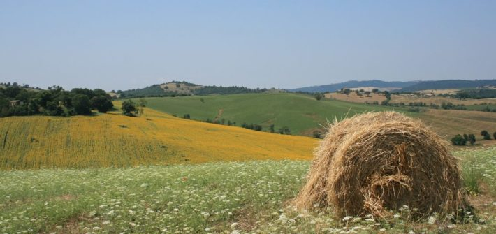 Panorama-maremmano