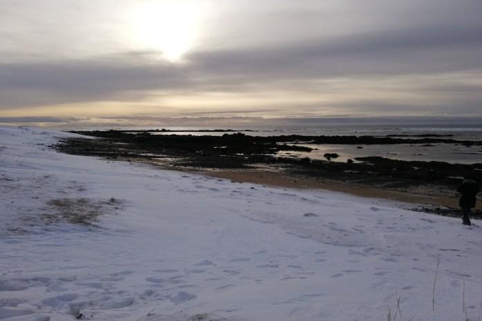 Ytri Tunga Beach islanda foche
