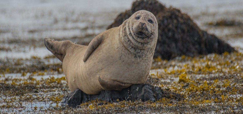 spiaggia foche islanda dove si trova
