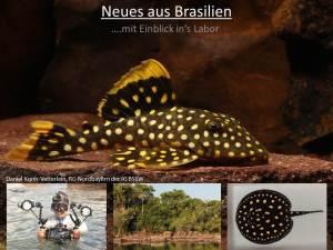 Neues aus Brasilien