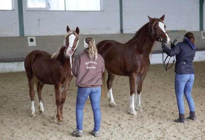 Ursel-Pferdemarkt HN