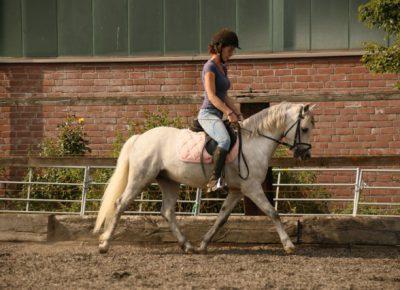 Equus Earl Grey