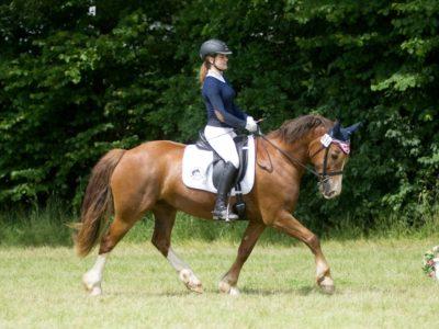 Cwmesgair Ceridwen mit Johanna Hagemeister - Gesamtsieger Sattelklasse