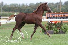 Foto Tierfotografie Jandke (18)
