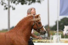 Foto Tierfotografie Jandke (48)