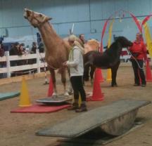 IG Welsh Pferd & Jagd 2016 (4)