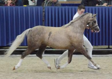 130 Maarlen´s Romeo Champion Sektion B DSC_7512