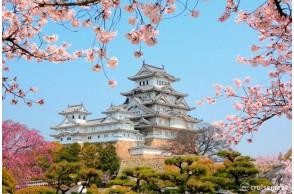 Color your Life Pink La vie en rose Japan