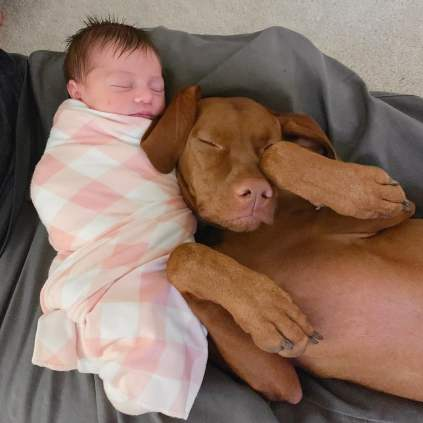 Cute-Pictures-Dogs-Napping-Kids-Babies-17