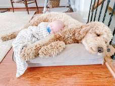Cute-Pictures-Dogs-Napping-Kids-Babies-4