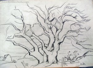 mulberry_tree_charcoal_pencil
