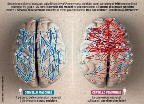 Differenze nei cervelli maschile e femminile