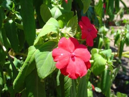 iguazu falls flowers