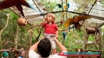 birds-iguazu0