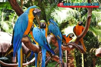 birds_iguazu04