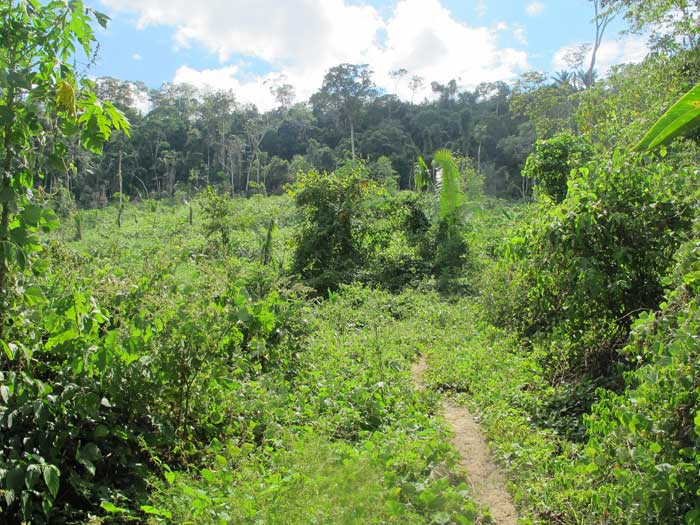 jungle Mayantuyacu Peru
