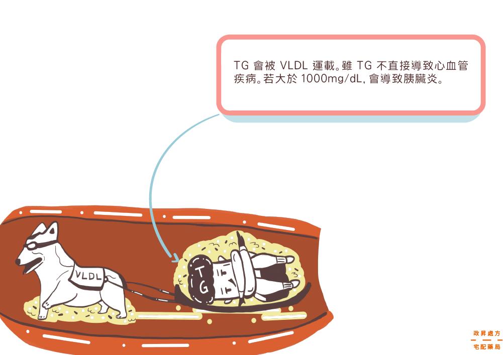 三酸甘油脂 (TG)