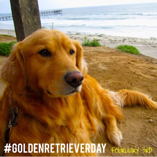 goldenretrieverday2