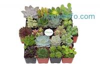 ihocon: Shop Succulents Unique Succulent (Collection of 20)多肉植物