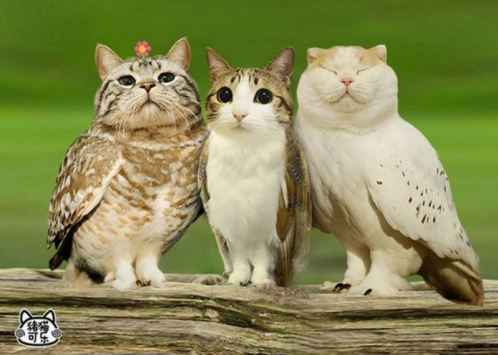 Image result for owl cat