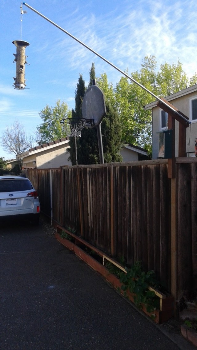 picture of bird feeder off fence