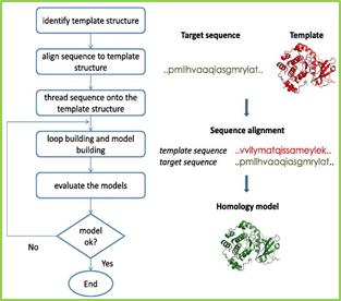 Figure-4: Flow chart of Structural based Computer Aided Drug Design (Homology model Building Process)