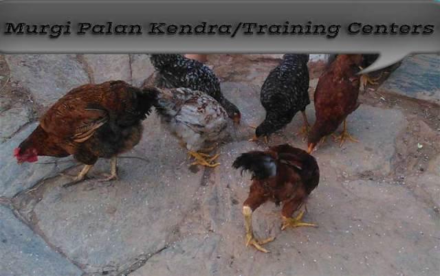 Murgi-Palan-Kendra-Training-Center