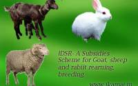 Subsidy-scheme-for-goat-sheep-rabbit-IDSR-hindi