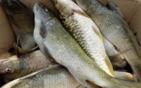 Fish-Farming-Machli-palan-business-in-india