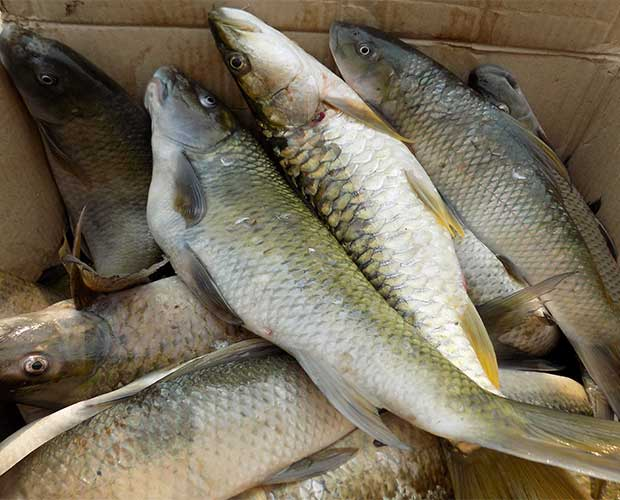 Fish farming Machli-palan-business-in-india