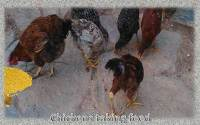 Poultry-feed-mill-business-