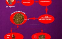 Mustard-oil-extraction-process-in-hindi